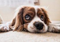 Житель Карелии хотел купить породистого щенка, но потерял деньги