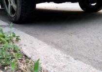 Жители Невинномысска боятся есть выросшие во дворах грибы