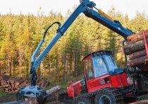 Сенаторы предложили упростить вырубку лесов на территории аэропортов