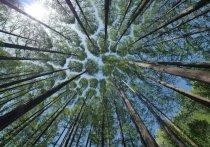 Новых природных пожаров в лесах Ямала не возникло