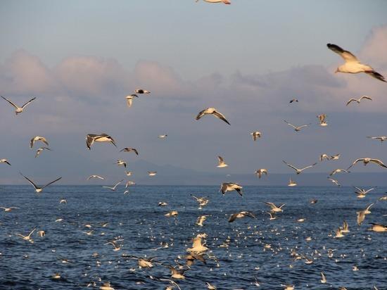 Эксперт оценил призывы в Японии вернуть четыре курильских острова