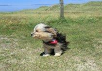 Ветер в Марий Эл может усилиться до 18 метров в секунду
