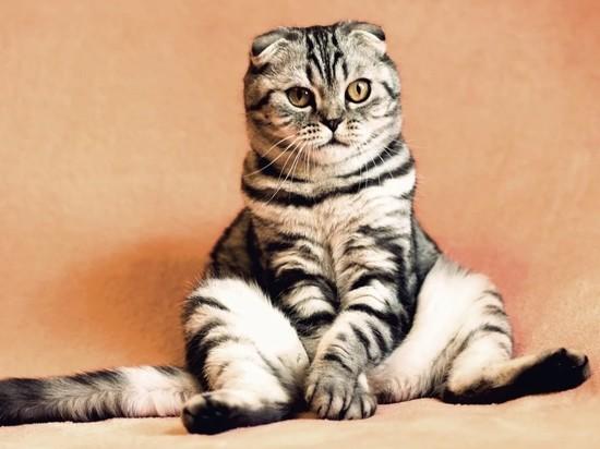 В Тюмени спасатели МЧС вызволили кошку из стиральной машины