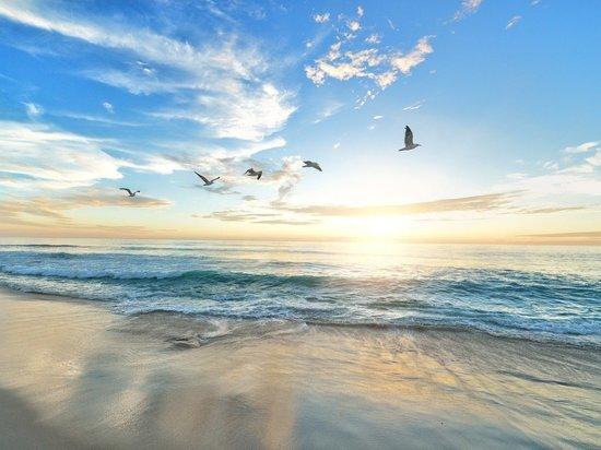 В РФ для пляжей установят единые требования по обеспечению безопасности
