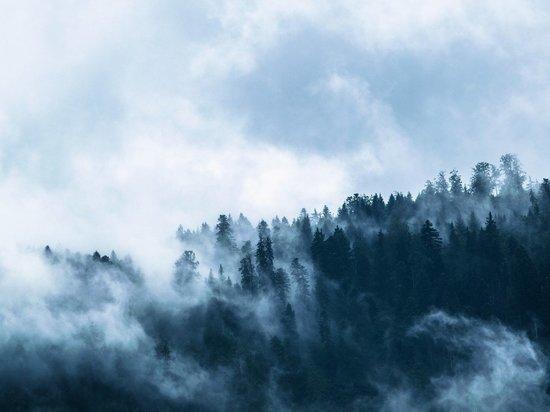 В ЯНАО горят два гектара леса