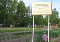 Ученые ТюмГУ изучают генетические ресурсы культурных растений