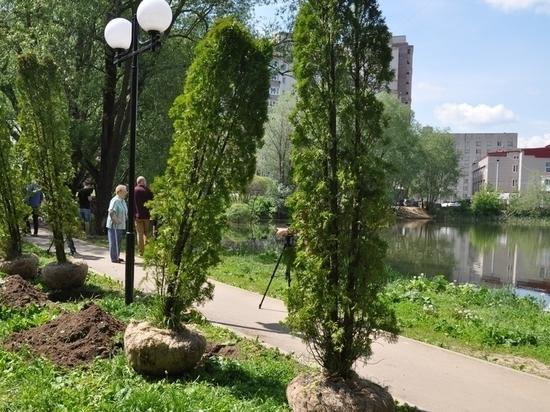 Во Владимире у Соловьиного пруда высадили аллею из туй