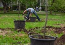 Экосовет Екатеринбурга решил, что государство не справляется с защитой деревьев