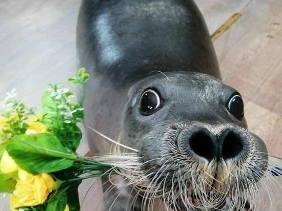 В Улан-Удэ волонтеры начали сбор средств для голодающих тюленей