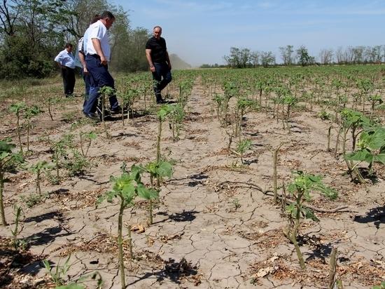 Град побил посевы на десятках тысяч гектарах на Ставрополье