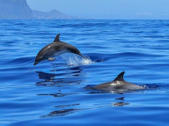 В Черном море зафиксировали резкий рост гибели дельфинов от отравления