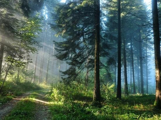 Почему в Серпухове особое внимание уделяют вопросам экологии