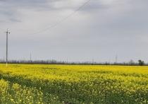 В Адыгее раскрыта серия краж энергооборудования на 700 тысяч рублей