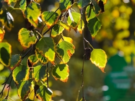 В лесах Волгоградской области заканчивается обработка от вредителей