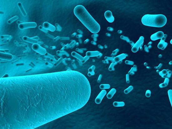 Германия: RKI о размножившихся опасных бактериях легионеллах