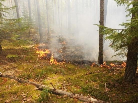 Степные пожары в Оренбургской области за сутки уничтожили огромную площадь земли