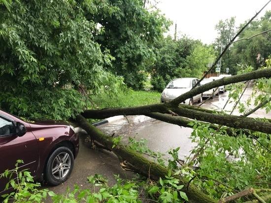 Десятки деревьев повалил шторм в Туле минувшей ночью