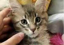 На Камчатке женщина-педагог жестоко убила котенка