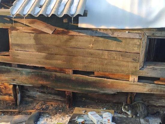 В Бурятии неизвестные подожгли гараж, в котором жили 25 кошек – спаслось всего 8