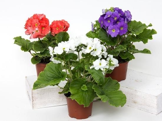 Жительница Оренбурга при покупке комнатных цветов лишилась денег