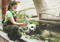 Как животные зоопарка перенесли карантин: улучшился аппетит, испортилось настроение