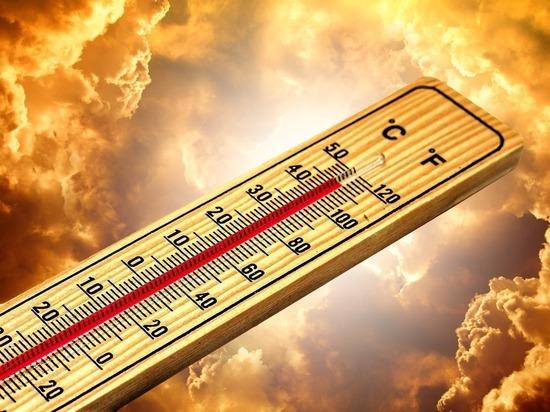 В Брянскую область возвращается аномальная жара