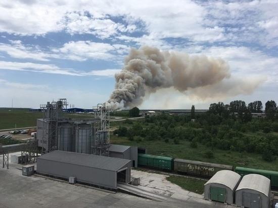 В Ростовской области загорелась шелуха подсолнечников на крупном участке