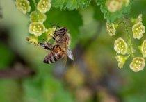 Проблемы гибели пчёл рассмотрят в Совфеде