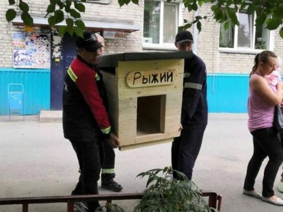 В Абакане жители двух дворов усыновили собак