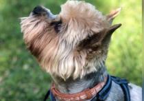 Москвичка убила престарелого пса ударом об асфальт