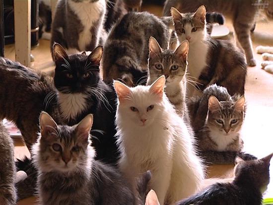 В Ярославле скончался хозяин 25 кошек