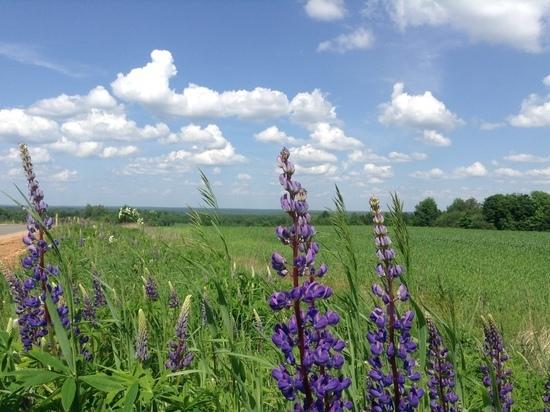 17 июня погода на Смоленщине бьет рекорды по жаре