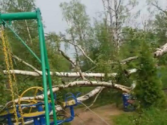 В Тверской области семья осталась без света из-за упавшего на провода дерева