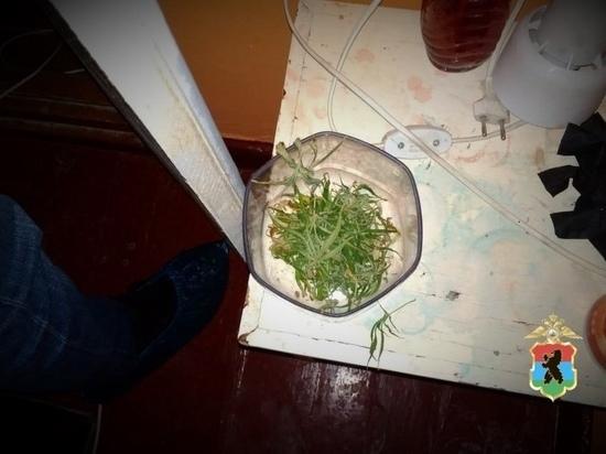 Более 1 килограмма марихуаны изъяли полицейские у двоих петрозаводчан