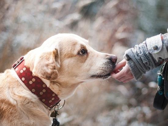 В Шарлыкском районе домашняя собака укусила ребенка