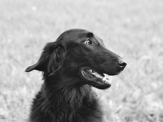 СК: В Рязанской области бездомная собака покусала шестерых детей