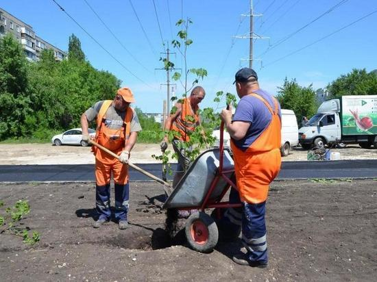 На четырех саратовских улицах высадили 56 деревьев