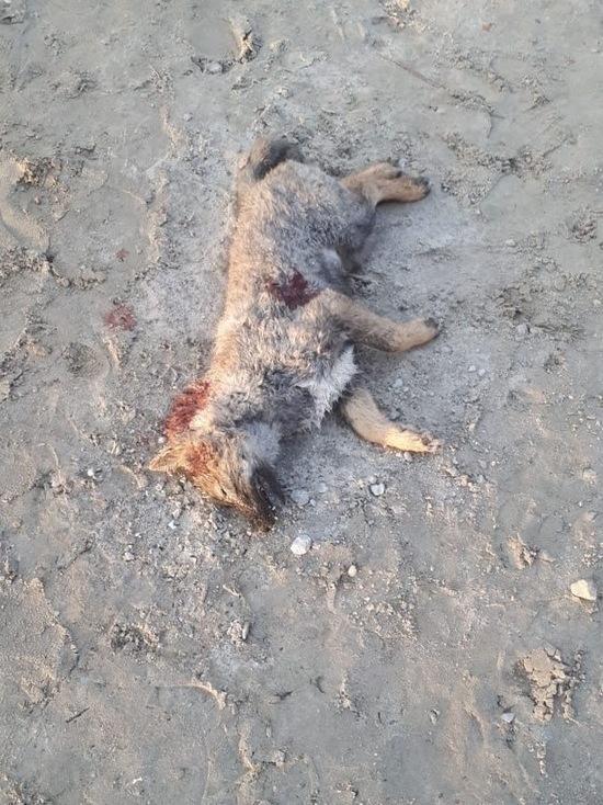 В Ноябрьске неизвестные расстреляли щенка