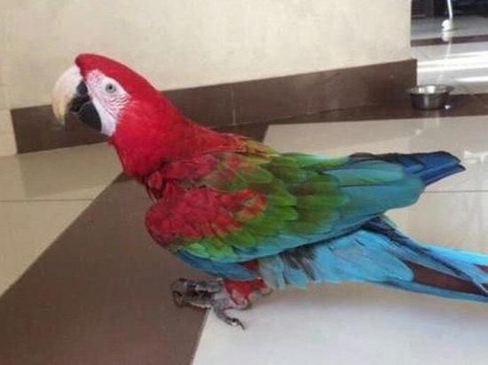 Из подмосковного женского монастыря улетел попугай, умеющий говорить: «Господи, помилуй»
