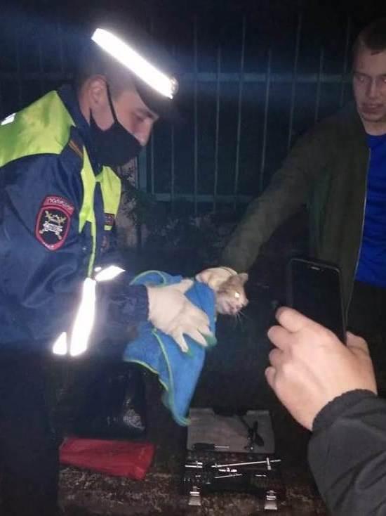 В Нижнекамске сотрудники ГИБДД извлекли из моторного отсека машины котенка