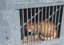 Кошки смогут спасаться в подвалах многоквартирных домов