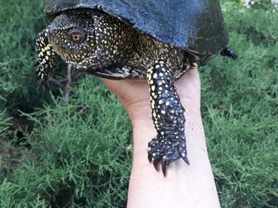 Черепаха по имени Звезда поселилась в волгоградском ботаническом саду