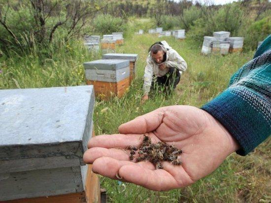 Может ли попасть на столы кузбассовцев мёд с пестицидами