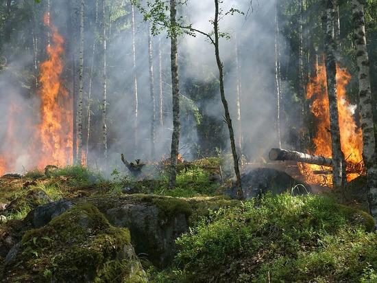 Целые сутки в Оренбургской области бушевали пожары