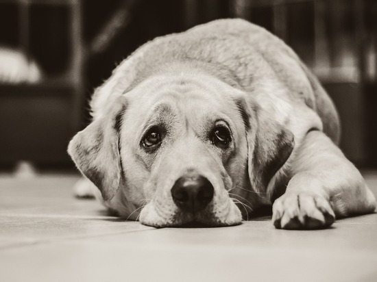 За угрозу своей собаке мужчина до смерти избил собутыльника