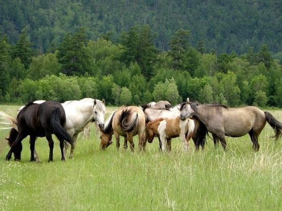Разряд молнии убил табун лошадей в Казахстане