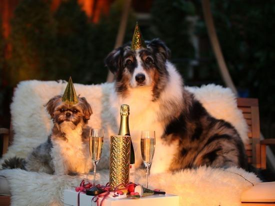 Жириновский предложил новый вариант новогодних каникул