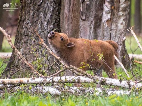 Приокско-Террасный заповедник открылся для посетителей
