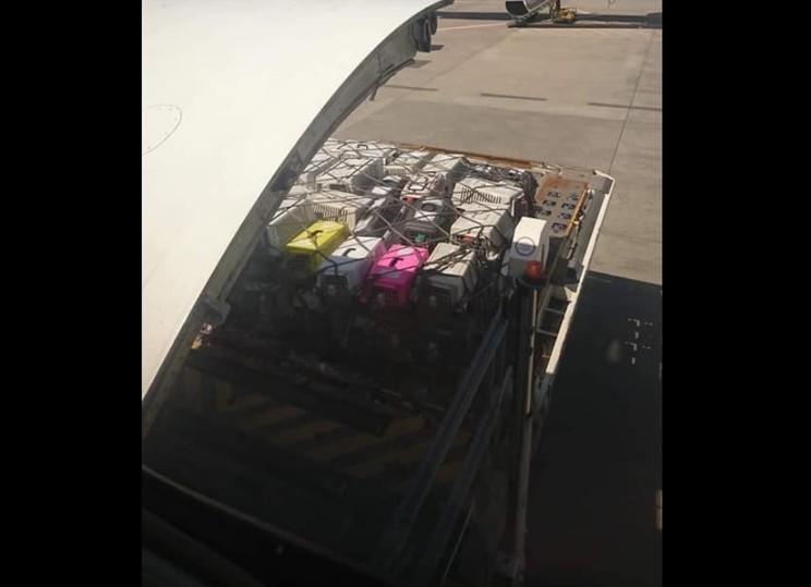 38 бульдогов задохнулись в украинском самолете на пути в Канаду