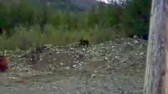 В Бурятии засняли расстрел медведей